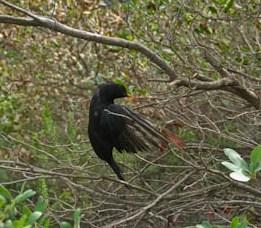 144 - Bird Caught In String