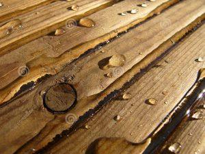 311 - Wet Wood 2
